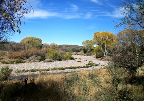 San Pedro River - Carol Cox
