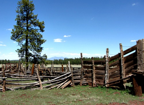 Cattle pens & San Francisco Peaks - Carol Cox