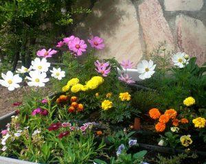 blog-flower-garden